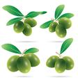 set of olives vector image