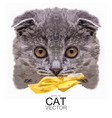 scottish fold cat detailed 3d vector image vector image