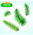 set fir branches christmas tree pine tree vector image vector image