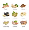 Set of seeds and nuts vector image