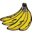 sketch of a delicious banana vector image vector image
