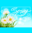 spring daisies background fresh green grass vector image vector image