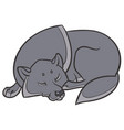 wild wolf sleep peacefully vector image