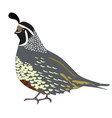 a quail vector image vector image