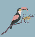 cute hand drawn toucan bird vector image