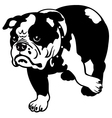 English bulldog black and white vector image