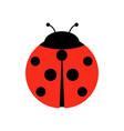 ladybug or ladybird graphic vector image vector image