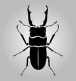 male stag-beetle vector image