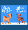 merry christmas congratulation from happy pets vector image vector image