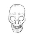 skeleton of the human head vector image vector image