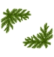 Two green spruce branches realistic Placed in the vector image vector image
