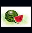 arbuz aquarel vector image