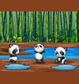 cartoon three pandas playing under rain vector image vector image