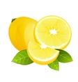 Fresh lemon fruit slice Realistic juicy citrus vector image vector image