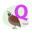 zoo abc letter with cute quail cartoon vector image vector image