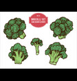 collection hand drawn colored brocolli vector image