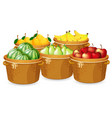 isolated fruits in different basket vector image