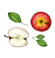 realistic apple half leaves set top view vector image