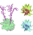 succulent on white background group of objects vector image vector image