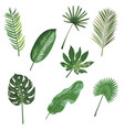 set of leaves of tropical plants collection of vector image vector image