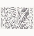 set with leaves and ferns vector image vector image