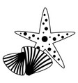 starfish seashell wildlife on white background vector image vector image