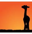 Detailed sheared female lama vector image