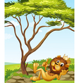 A king lion lying down near the tree vector image vector image