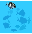 Black and white fish swims in the water vector image vector image