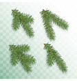 conifer branches set green branches a vector image vector image