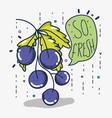so fresh grapes vector image vector image