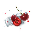 cherry berries with ice cubes and droplets of vector image vector image