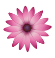 A flower with pink petals vector image vector image