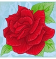 Bright red rose blooming vector image