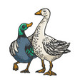 duck and goose friends engraving vector image