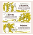 Set of Olive design templates banners vector image