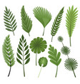 tropical leaves collection isolated vector image