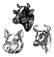 hand drawn cow and pig heads isolated on white vector image