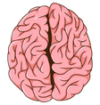 human left and right brain cartoon vector image