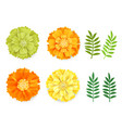 Decorative orange green yellow marigolds and
