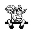 horned goat - cheeky goat peeking out - face head vector image vector image