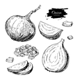 Onion hand drawn set Full half and cutout vector image vector image