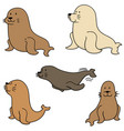 set of sea lion vector image vector image