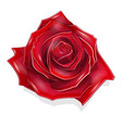 stock scarlet rose vector image vector image