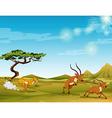 Cheetah chasing deers in the savanna vector image vector image