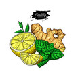 lemon ginger and mint drawing root hearb vector image vector image