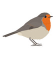 robin bird isolated object vector image vector image