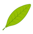 tea green leaf tea tree leaf on white vector image