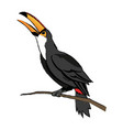 Toucan bird on the nature in brazil vector image
