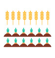 wheat field and carrots icons vector image